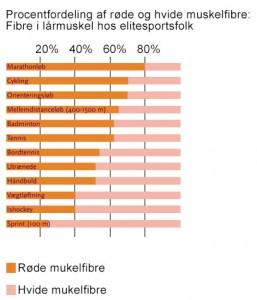 muskelfibre røde hvide muskelfibre procentfordeling